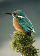boat holiday spot a kingfisher