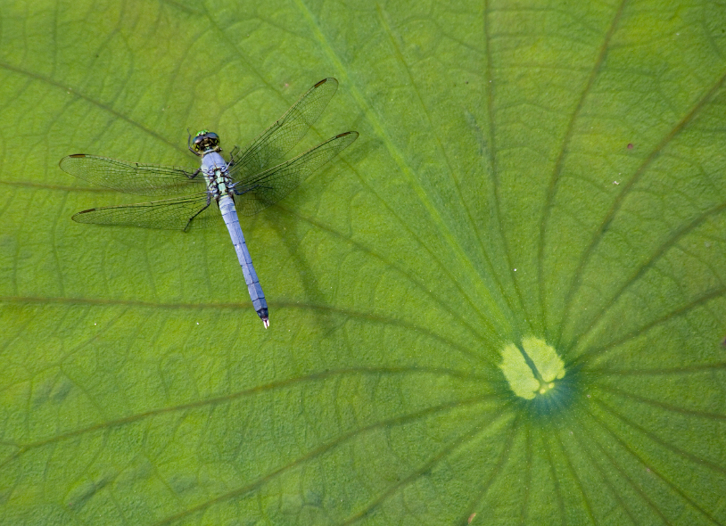 narrowboat cruise wildlife dragonfly