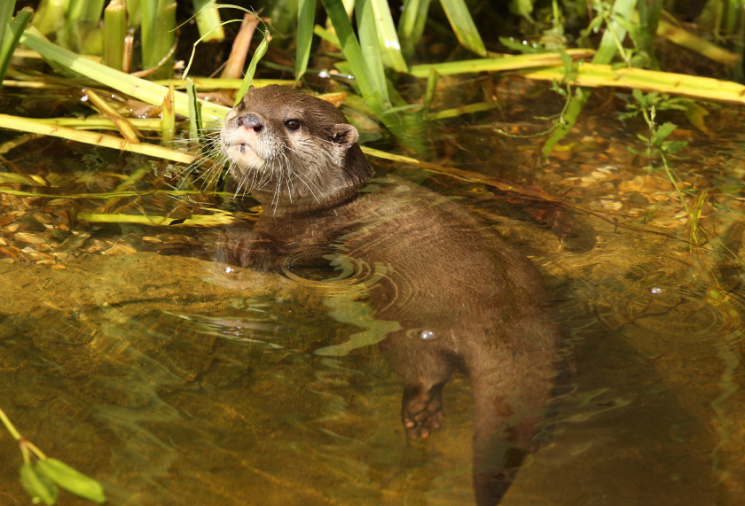boating wildlife fenland otter