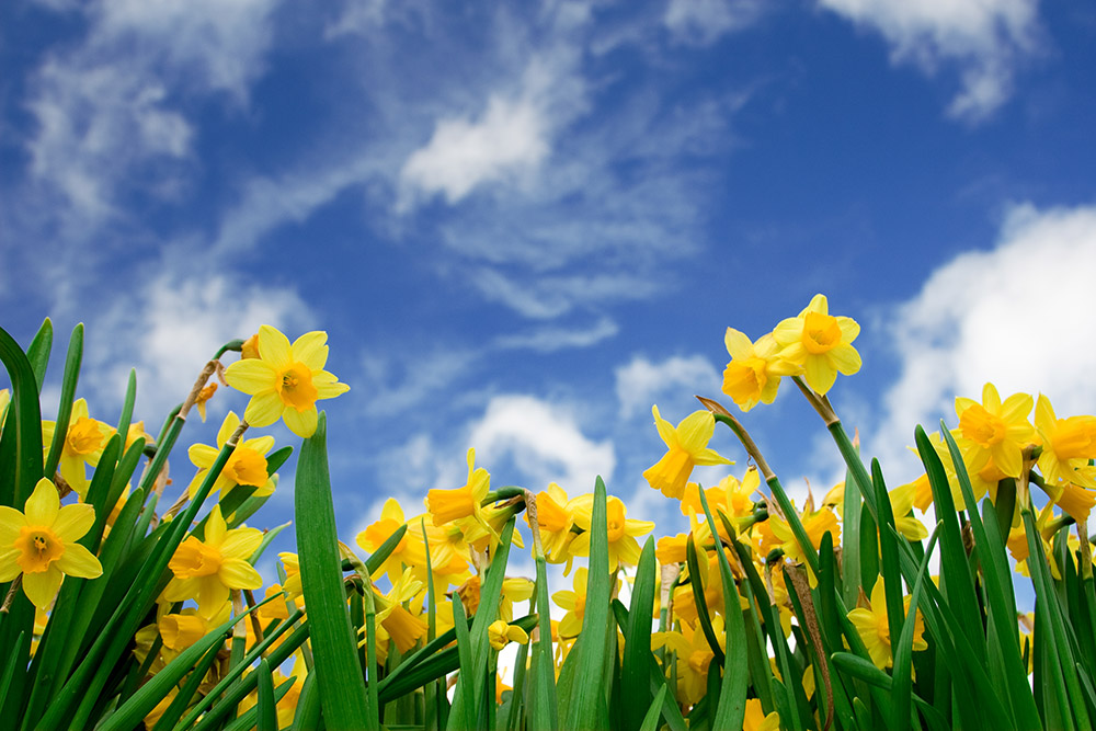 Fox Narrowboats | Easter Boating Holiday: 7 Reasons to go Fens Boating in Spring - photo#44