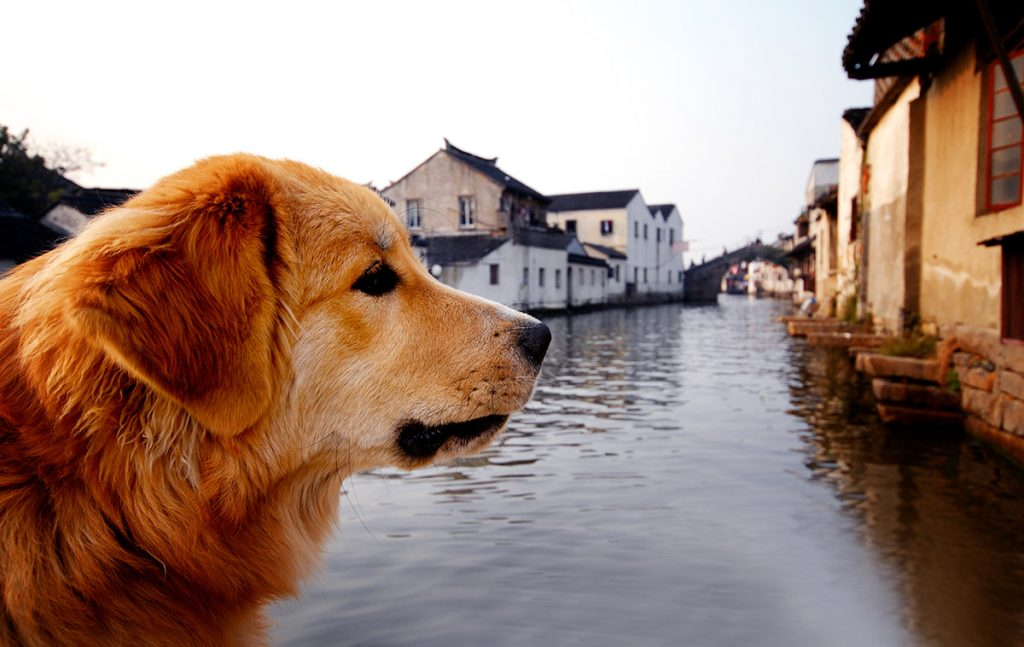 ultimate guide dogs canalboats