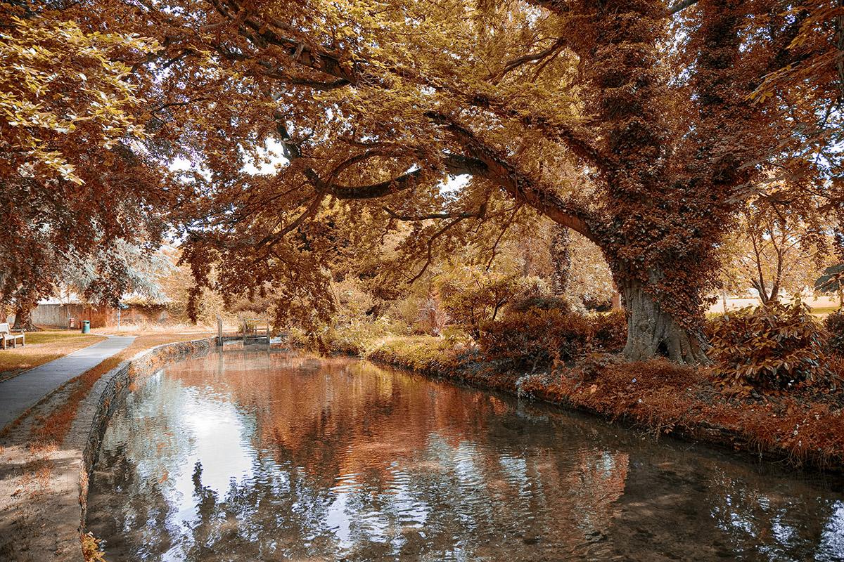 canal autumn
